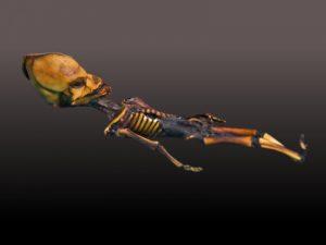 Emery Smith y las autopsias extraterrestres