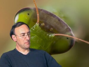 Extraterrestres insectoides