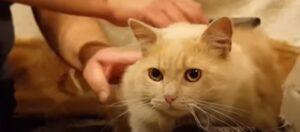 Dióxido de Cloro para animales