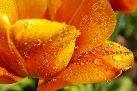 rocio flor
